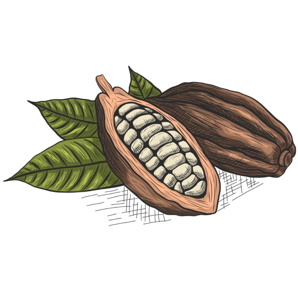 Activos Cacao