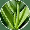 aloe vera ingrediente de Dehesia Cosmética EcoNatural