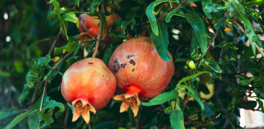 Cosmetica Natural Granada Antioxidante