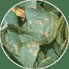 goma xantana ingredientes Dehesia Cosmética EcoNatural
