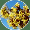 hamamelis ingredientes Dehesia Cosmética EcoNatural