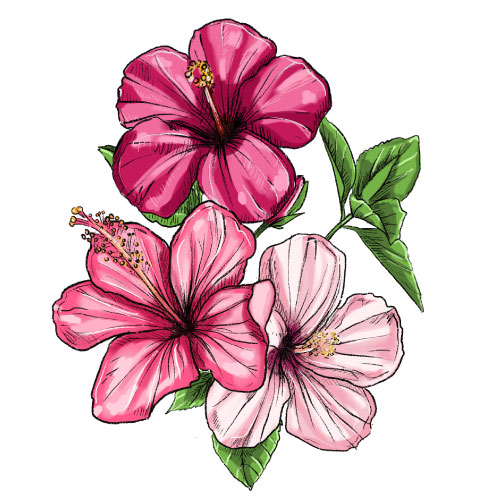 hibisco dibujo dehesia