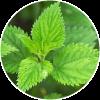 Ortiga Verde Dehesia Cosmetica