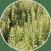 romero ingredientes Dehesia Cosmética EcoNatural