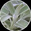 Salvia Dehesia Cosmetica
