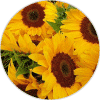 vitamina-e ingredientes Dehesia Cosmética EcoNatural